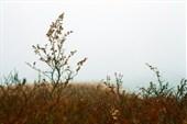 Туман над тайгой