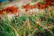 Черничные поляны