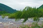 Вливается приток Эвонокит