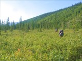 Фото 27. Через неприятное болото, заросшее карликовой берёзкой