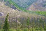 Фото 44. Старая гарь на берегу Светлой напротив горы Байчикан