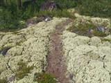 Фото 29. Тропа через поля ягеля в долине реки Ильбикайчи