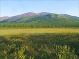 Фото 30. Заболоченная низина на водораздельном плато