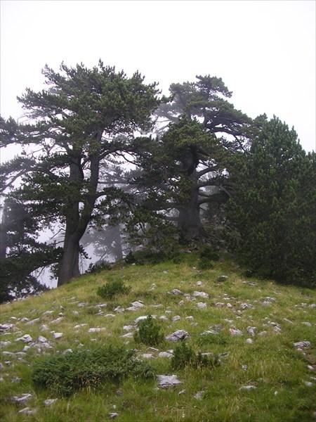 Вот так деревья