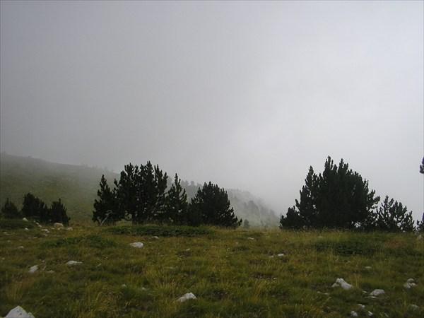P8216571