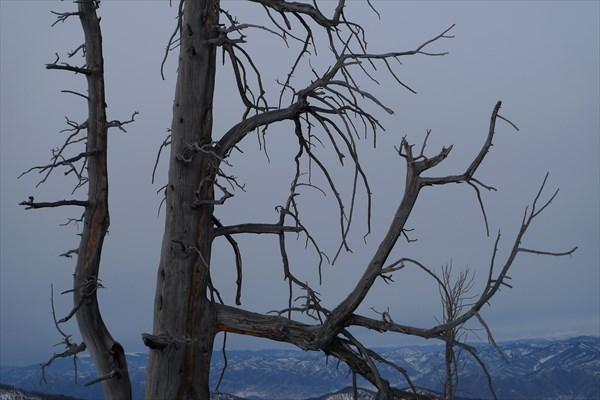 Долина задумчивых деревьев
