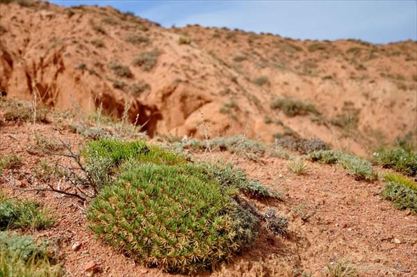 Растительность в каньоне Сказка
