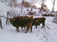 08-Абхазия