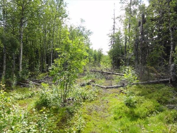 Упавшие деревья.