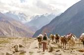 Провиант в лагерь доставлят на мулах, которые сами знают тропу