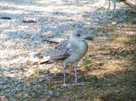 Птица на пляже