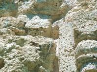 Пористый камень - ракушечник