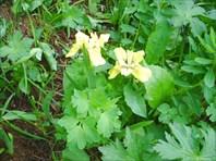 Флора Тигирецкого хребта