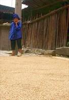 Бабушка и рис