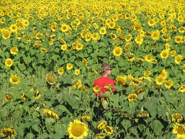 Странные цветы преследовали нас всю дорогу...