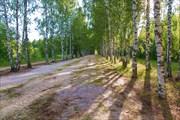 Берёзовая аллея по пути к оз. Светлояр