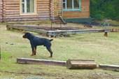 Собака-охренник