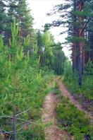 Карельский пейзаж