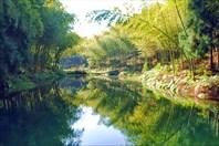 Бамбуковое море Сычауни