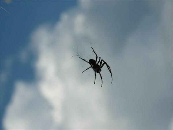 Остров - царство пауков