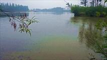 Впадение первой протоки Апсата. Наводнение