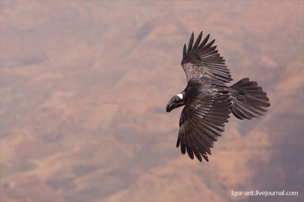Очень круто фотографировать птиц