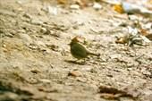 Прилетевшее на завтрак маленькое наглое птичко