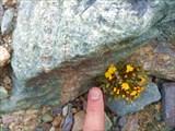 Маленький симпатичный цветок