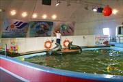 Мурманский дельфинарий