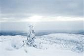 Тайга в снегах