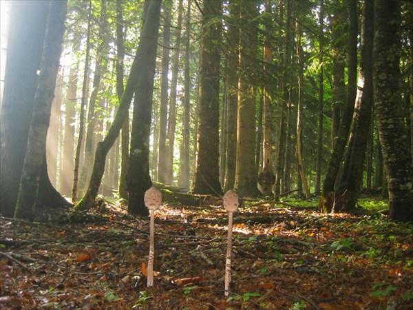 Шикарный буковый лес