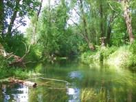 33 река в лесу