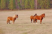 на Белой нас встретили лошади