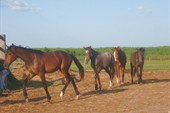 лошадки на выпасе