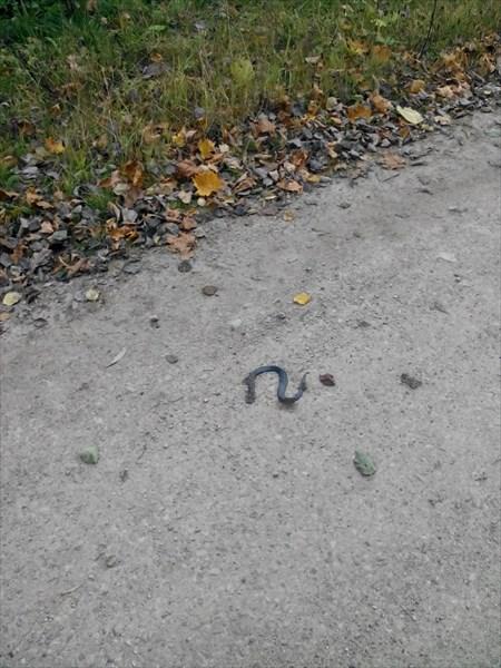 Змея попала под колеса