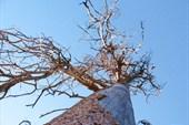 дерево. вид снизу