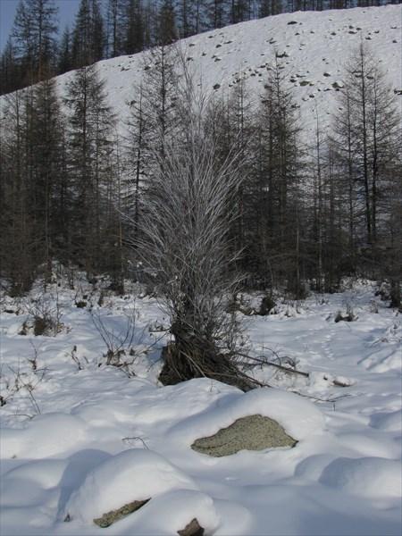 116_Черского