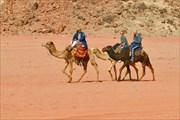 По пустыне не только ходят