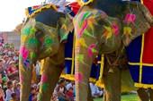 Слоны3