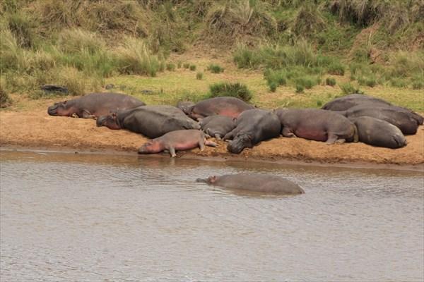 Сафари по Кении и Танзании