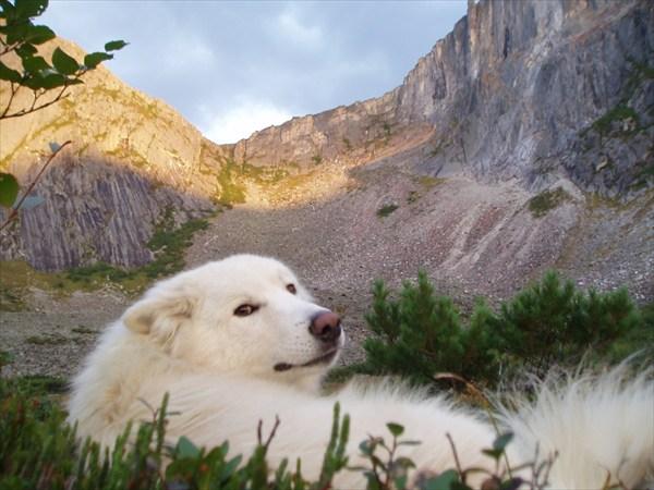 Барс в горах