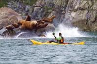Вдоль побережья Камчатки на каяках