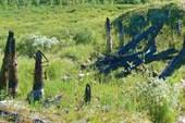 Остатки сгоревшего моста.