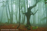 Партизанскими лесами Крыма