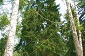 Лягушка высоко на дереве
