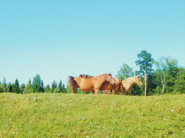 Лошадки!