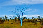 Bluetree2