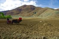 На Тибетском плато