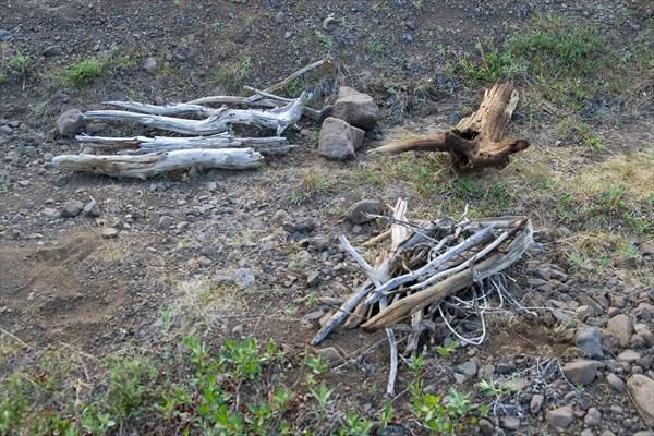 Ископаемые деревья в тундре Хонна-Макита