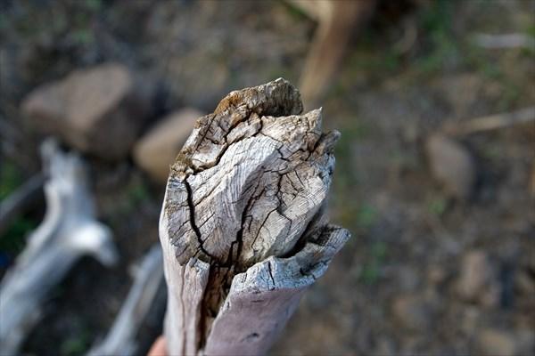 Ископаемое дерево